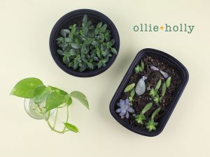 Black Takeout Containers Usage For Plants