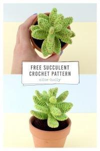 Free Sedum Adolphii (Golden Glow) Succulents Amigurumi Crochet Pattern